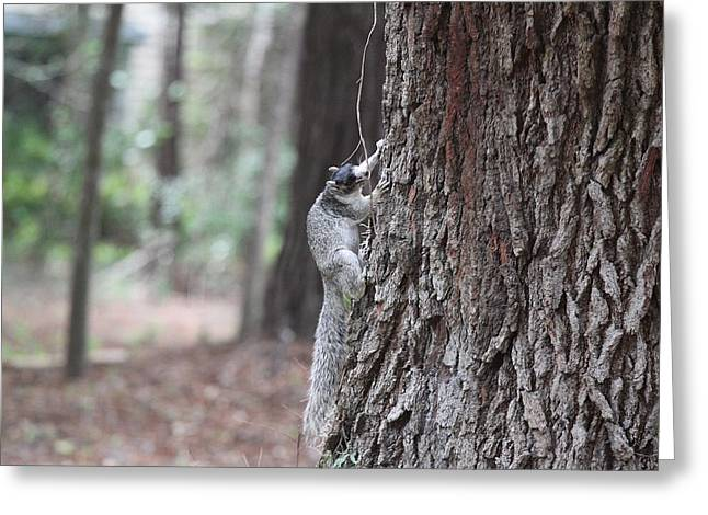 Fox Squirrel Greeting Cards - Fox Squirrel Vertical Greeting Card by Jean Macaluso