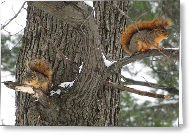 Fox Squirrel Greeting Cards - Fox Squirrels Perched  Greeting Card by Dennis Pintoski