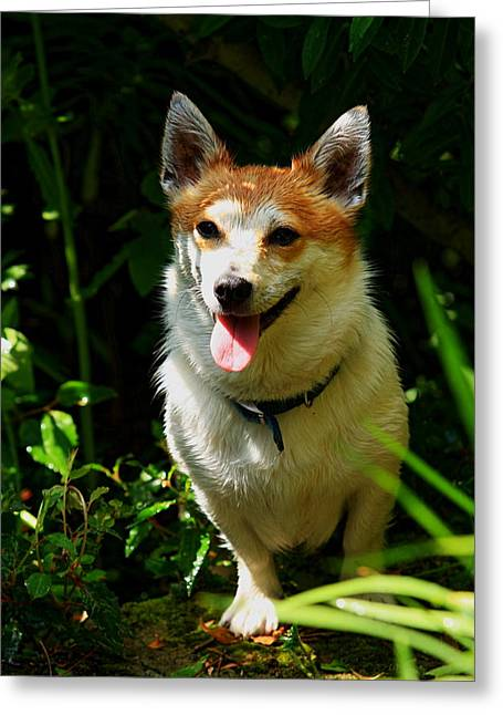 Dog In Landscape Greeting Cards - Parson Russell Terrier Greeting Card by Aidan Moran