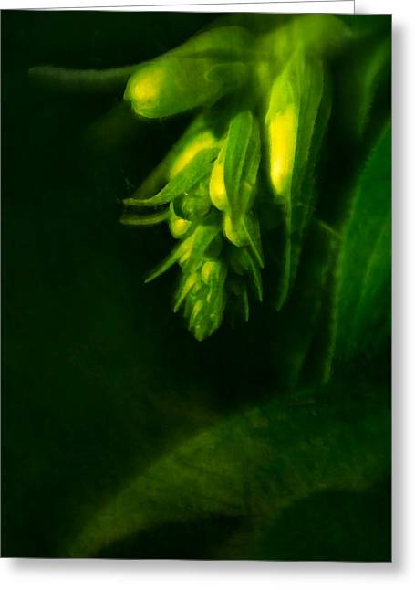 Foxglove Buds Greeting Card by  Onyonet  Photo Studios