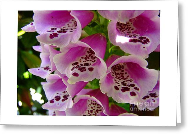 Recently Sold -  - Fineartamerica Greeting Cards - Foxglove Close Up Greeting Card by Alan Thwaites