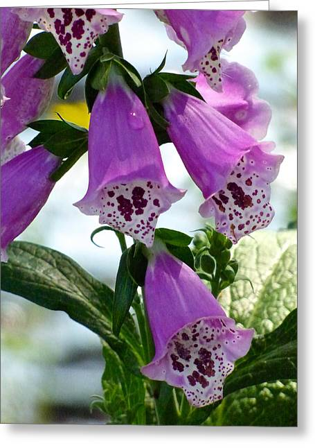 Foxglove Flowers Greeting Cards - Foxglove Greeting Card by Pat Exum