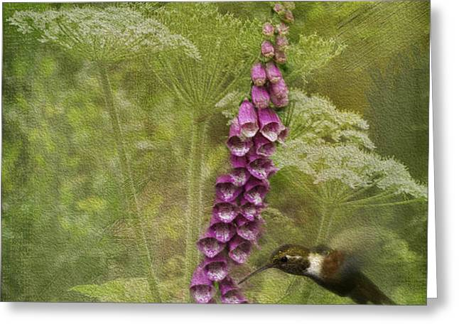 Foxglove Queen Ann's Lace and the Hummingbird Greeting Card by Diane Schuster