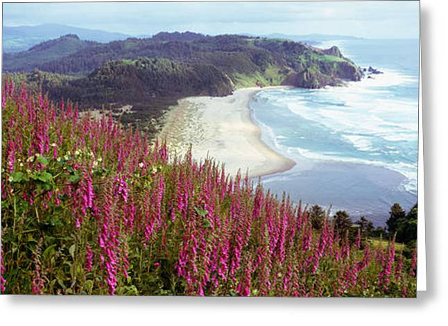 Blooms Greeting Cards - Foxgloves At Cascade Head, Tillamook Greeting Card by Panoramic Images