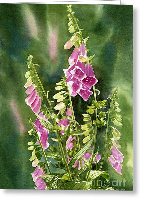 Foxglove Flowers Paintings Greeting Cards - Foxgloves with Background Greeting Card by Sharon Freeman