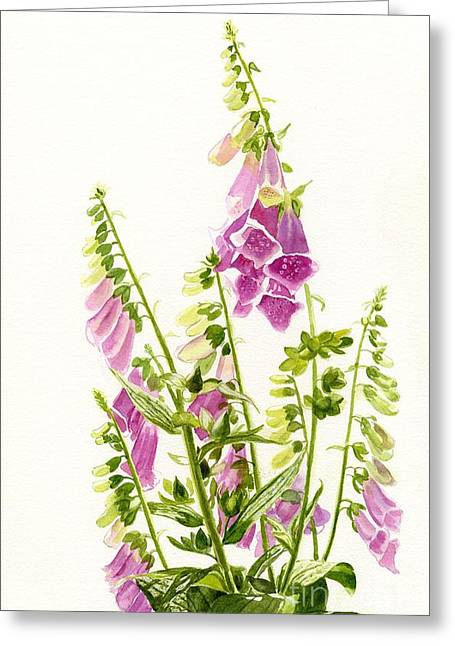 Foxglove Flowers Paintings Greeting Cards - Foxgloves with White Background Greeting Card by Sharon Freeman