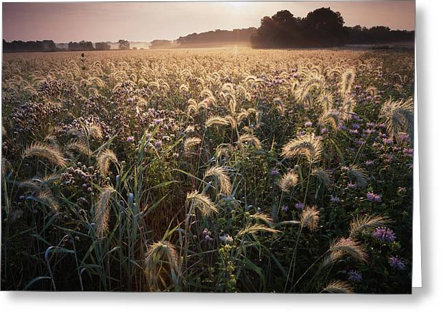 Hack-ma-tack National Wildlife Refuge Greeting Cards - Foxtails Greeting Card by Ray Mathis