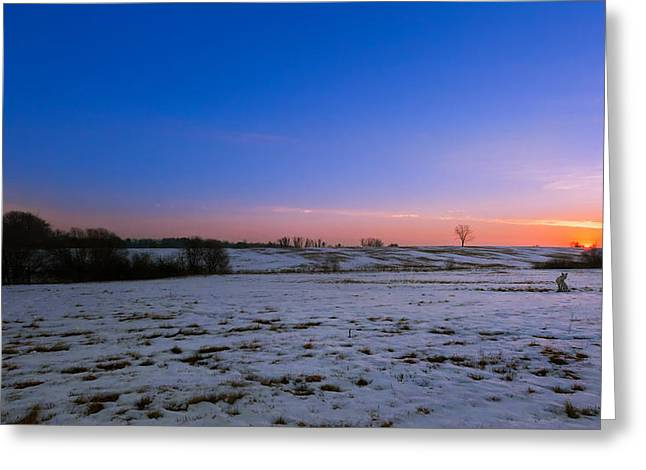 Windmill Greeting Cards - Foxy Sunrise Greeting Card by Bill  Wakeley