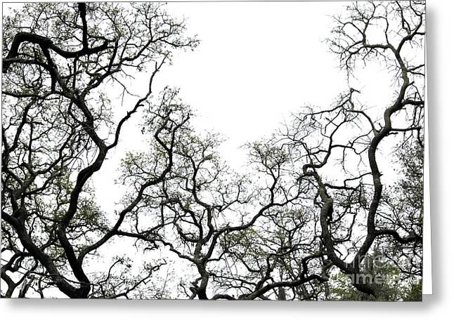Fractal Branches Greeting Card by Theresa Willingham