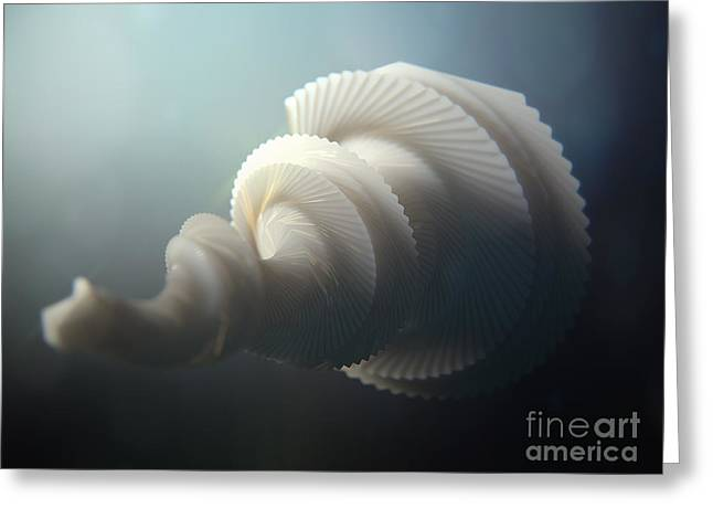 Abstractions Greeting Cards - Fractal SeaShell  Greeting Card by Pixel  Chimp