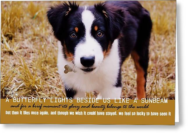 Lucky Dogs Greeting Cards - FRAGILE LOVE quote Greeting Card by JAMART Photography