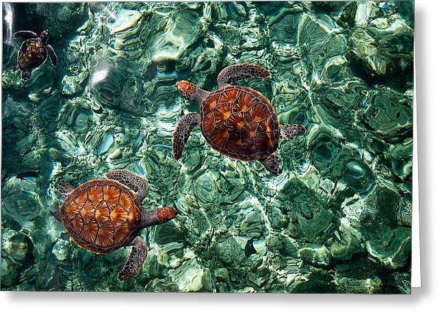 Fragile Underwater World. Sea Turtles in a Crystal Water. Maldives Greeting Card by Jenny Rainbow