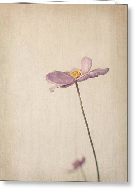 Fragility Greeting Card by Amy Weiss
