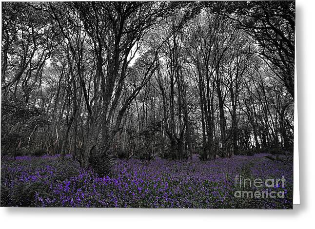 Fragments Of Wood Greeting Cards - Fragments of Color Bluebells Greeting Card by Julian  Walters