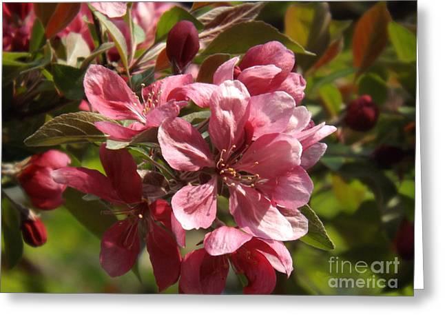 Brenda Brown Greeting Cards - Fragrant Crab Apple Blossoms Greeting Card by Brenda Brown