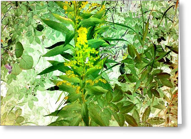 Glass Wall Drawings Greeting Cards - Fragrant Foliage Greeting Card by TLynn Brentnall