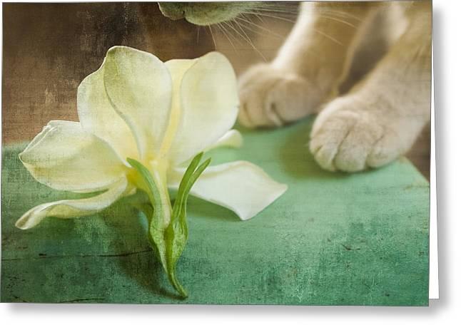 Kim Henderson Greeting Cards - Fragrant Gardenia Greeting Card by Kim Henderson