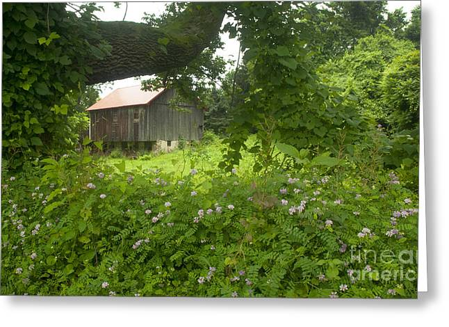 Pa Barns Greeting Cards - Framed in green Greeting Card by Paul W Faust -  Impressions of Light