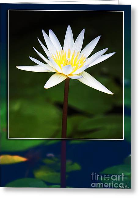Large White Flower Close Up Greeting Cards - Framed Serenity Greeting Card by Nishanth Gopinathan