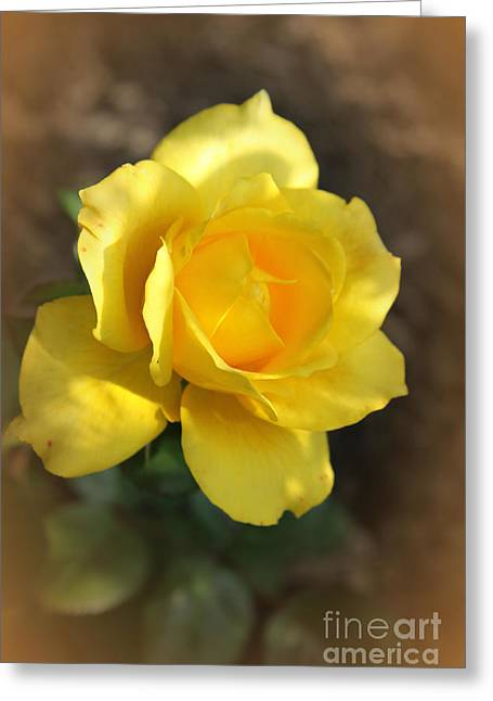 Abstract Digital Digital Greeting Cards - Framed Yellow Rose Greeting Card by Christiane Schulze Art And Photography