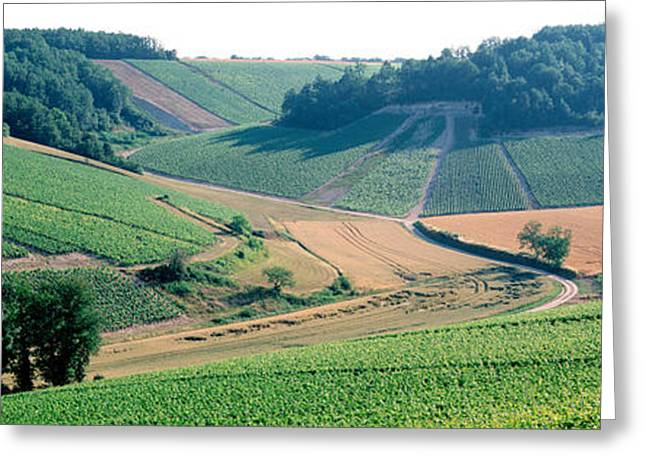 Grape Vineyard Greeting Cards - France, Chablis, Vineyards Greeting Card by Panoramic Images