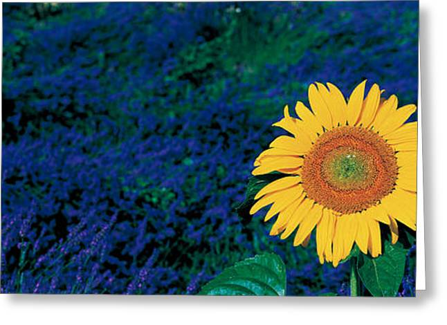Singular Greeting Cards - France, Provence, Suze-la-rouse Greeting Card by Panoramic Images