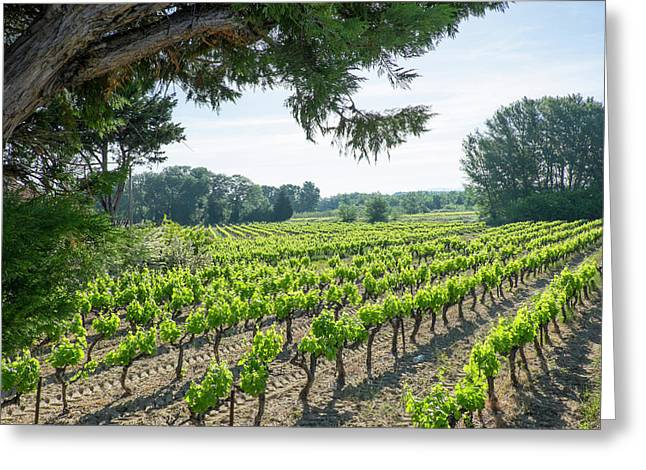 France, St Remy, Countryside Vineyards Greeting Card by Emily Wilson