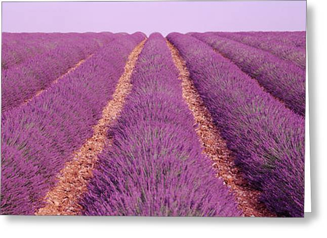Orchard Greeting Cards - France, View Of Rows Of Blossoms Greeting Card by Panoramic Images