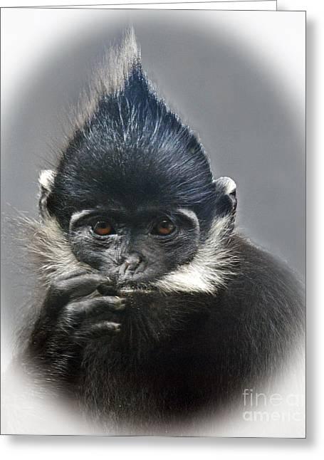 Francois Digital Greeting Cards - Francois Langur Monkey III Greeting Card by Jim Fitzpatrick