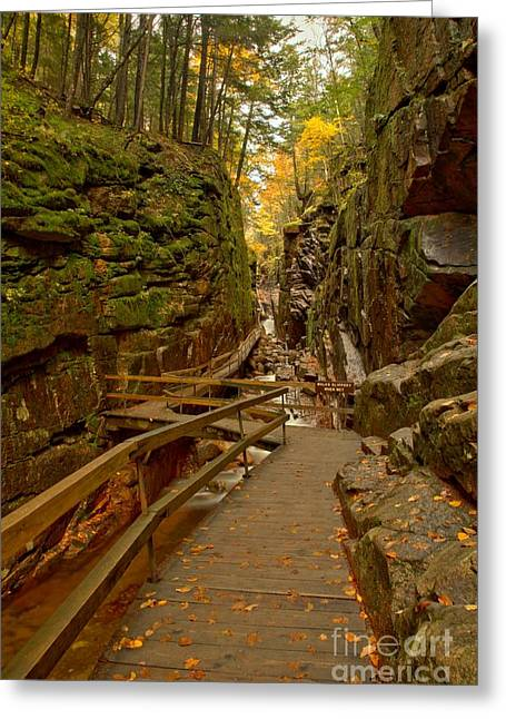 Lush Green Greeting Cards - Franconia Notch Flume Gorge Boardwalk Greeting Card by Adam Jewell