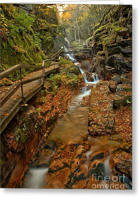 Lush Green Greeting Cards - Franconia Notch Lush Greens And Rushing Waters Greeting Card by Adam Jewell
