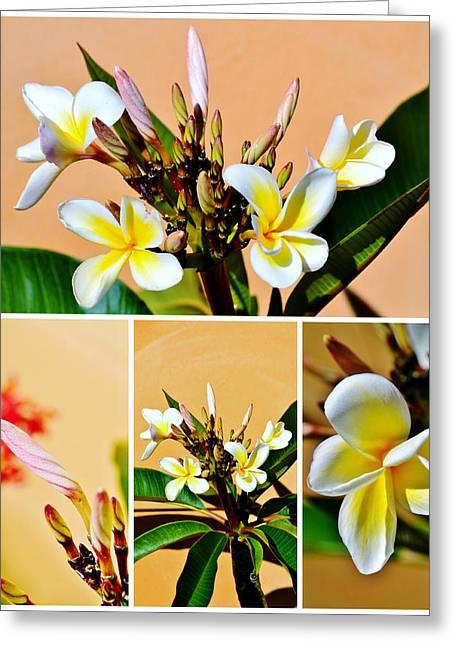 Decorativ Greeting Cards - Frangipani blossom Greeting Card by Werner Lehmann