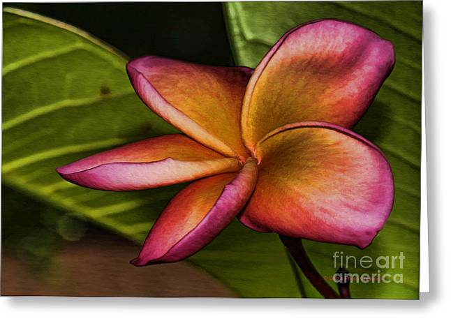 Pudica Greeting Cards - Frangipani Creation Greeting Card by Deborah Benoit