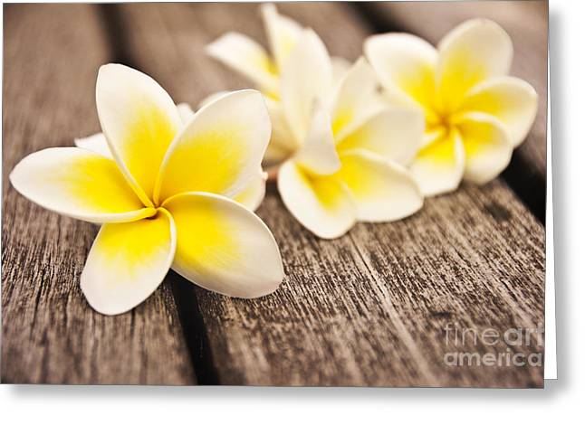 Close Up Floral Greeting Cards - Frangipani flower Greeting Card by Delphimages Photo Creations