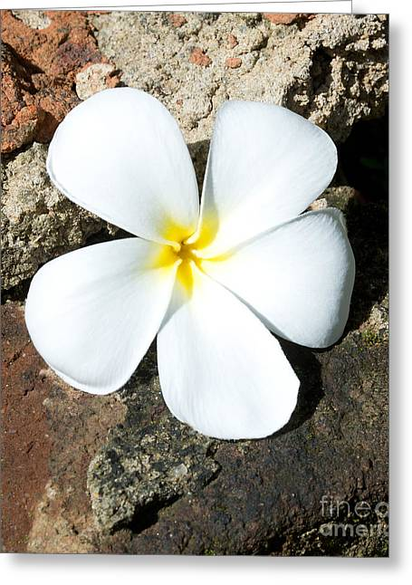 Southern Province Greeting Cards - Frangipani on rock Greeting Card by Christina Rahm
