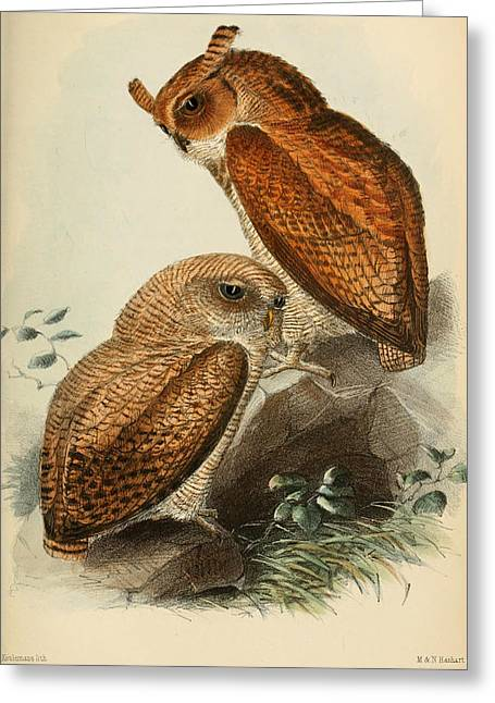 Drawing Of Eagle Greeting Cards - Frasers Eagle Owl Greeting Card by J G Keulemans