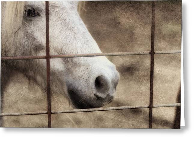 Horse Photographs Greeting Cards - Freckles Greeting Card by Amy Tyler