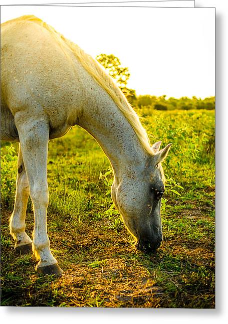 Freckles At Sunset Greeting Card by David Morefield