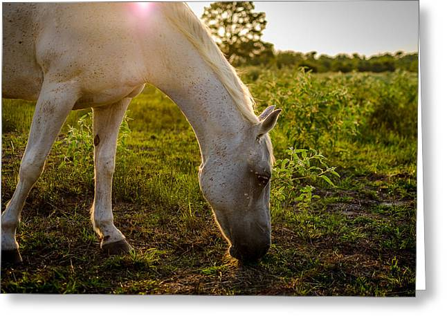Freckles Greeting Cards - Freckles Pferd Greeting Card by David Morefield