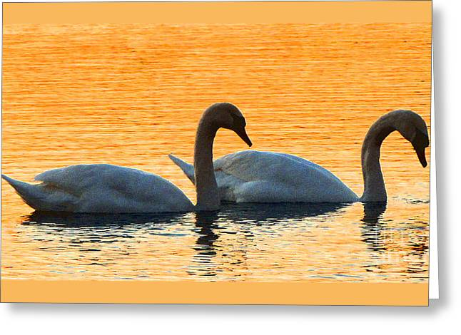 Swans... Greeting Cards - FRED and ETHEL Greeting Card by Gardening Perfection