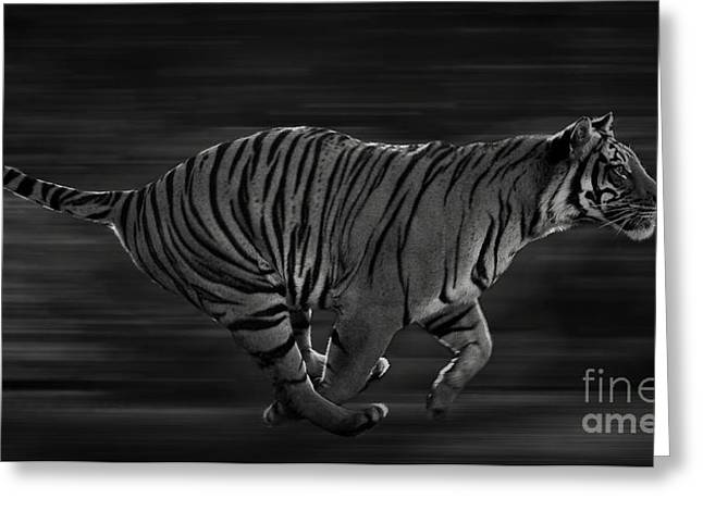 Tigress Greeting Cards - Free Greeting Card by Adrian Tavano