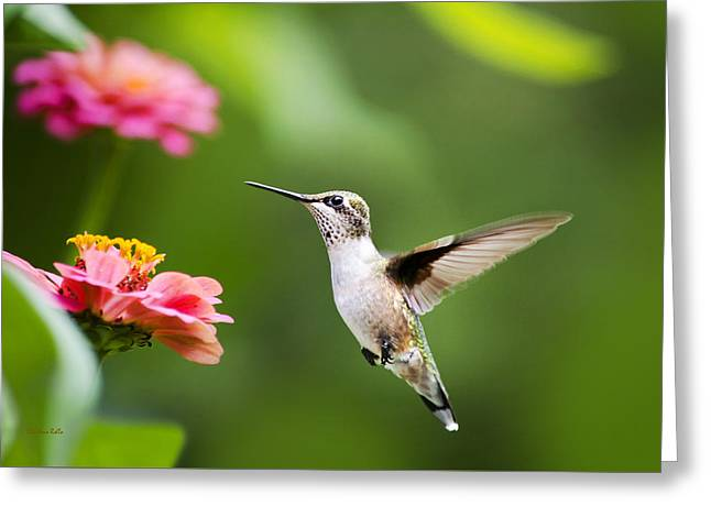 Hovering Greeting Cards - Free As A Bird Hummingbird Greeting Card by Christina Rollo