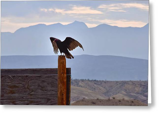Terlingua Texas Greeting Cards - Free Bird Greeting Card by Skip Hunt