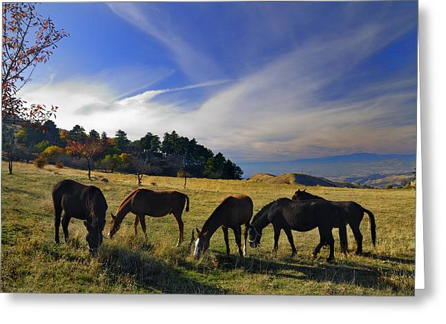 Free Horses At The Mountains Greeting Card by Guido Montanes Castillo