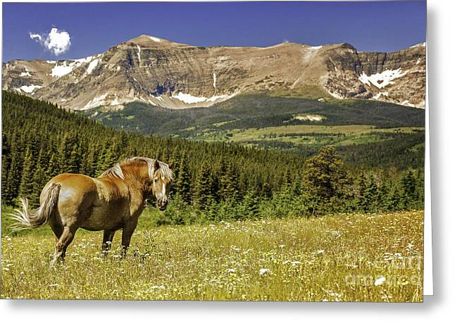 Horse Images Greeting Cards - Free Roaming Stallion on a Montana Ranch Greeting Card by Thomas Schoeller