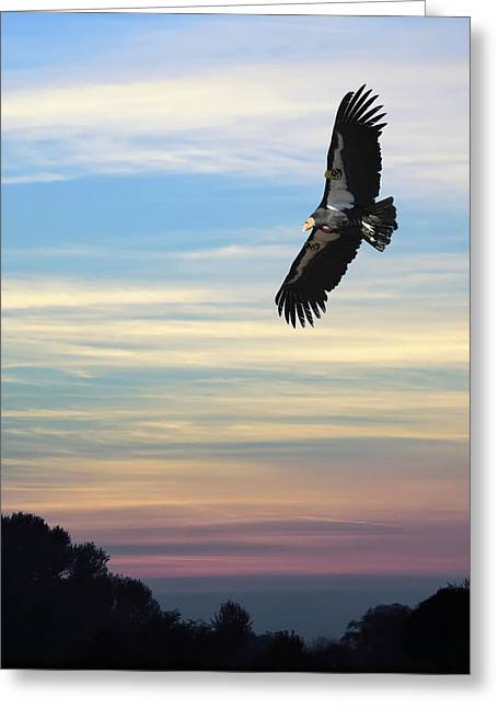 Free Of Peace Greeting Cards - FREE to FLY AGAIN - CALIFORNIA CONDOR Greeting Card by Daniel Hagerman