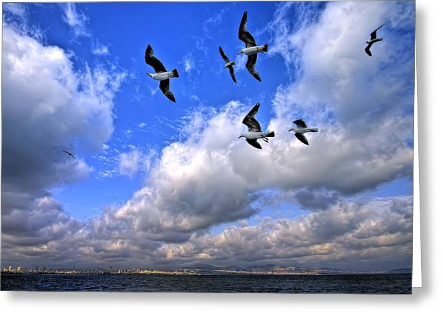 Marmara Greeting Cards - Freedom Flying Threw Our Wings Greeting Card by Leyla Ismet