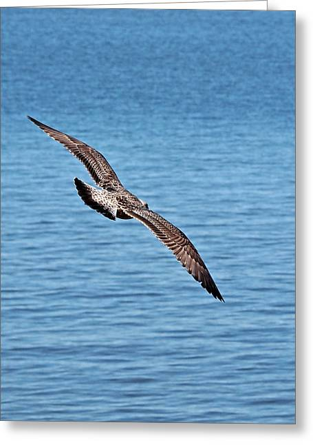 Flying Seagull Greeting Cards - Freedom Greeting Card by Gill Billington