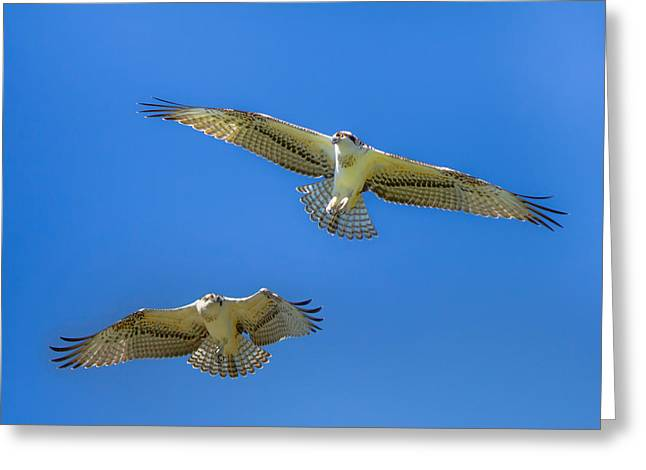 Alberta Framed Prints Greeting Cards - Freedom Greeting Card by Laura Bentley