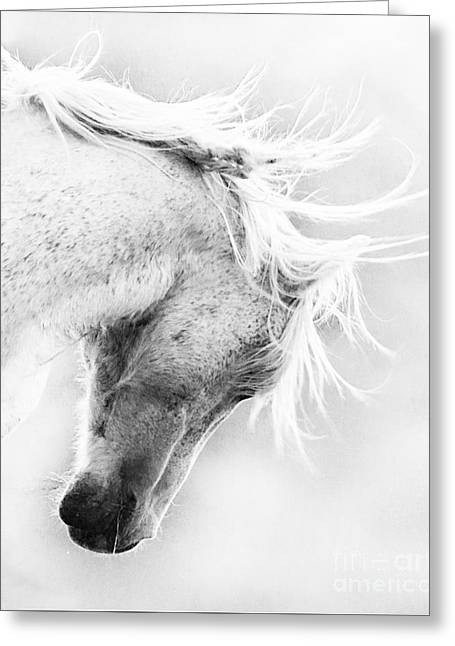 Wild Horses Greeting Cards - Freedoms Head Shake Greeting Card by Carol Walker